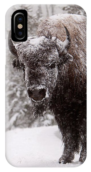 Ice Cold Winter Buffalo IPhone Case