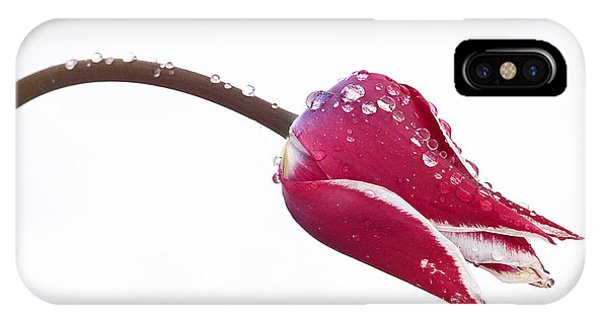 Ice Drops On Tulip IPhone Case