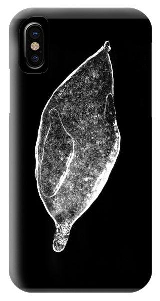 Ice Storm Leaf IPhone Case