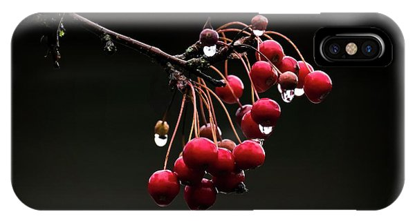 iPhone Case - Iced Crab Apples by Bill Linn