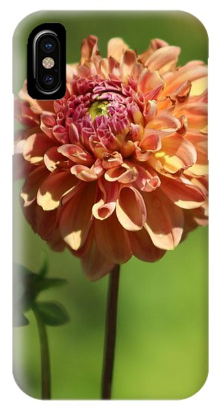 Iced Tea Dahlia In Marzipan And Milano Tones IPhone Case