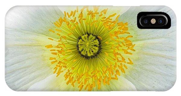 Iceland White Poppy IPhone Case