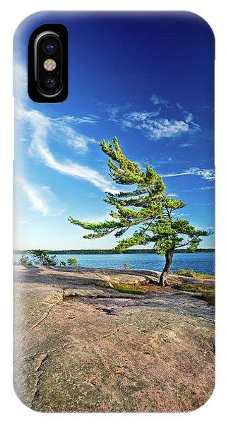 Iconic Windswept Pine IPhone Case