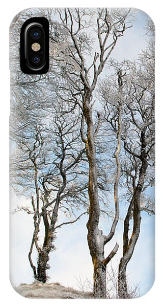 Icy Trees IPhone Case