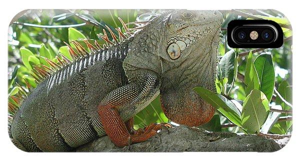 Iguana Daze IPhone Case