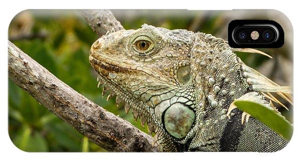 Iguana IPhone Case