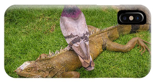 Iguana With Pigeon On Its Back IPhone Case