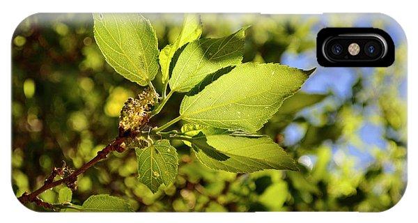 Illuminated Leaves IPhone Case