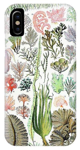 Alga iPhone X Case - Illustration Of Algae And Seaweed  by Adolphe Philippe Millot