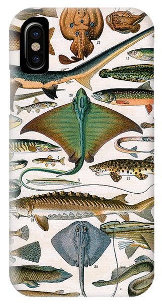 Ichthyology iPhone Case - Illustration Of Ocean Fish by Alillot