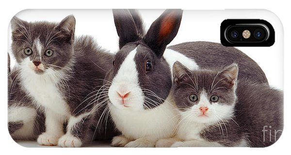 I'm Bun Of The Family IPhone Case