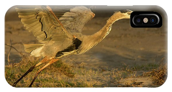 I'm Out Of Here Wildlife Art By Kaylyn Franks IPhone Case