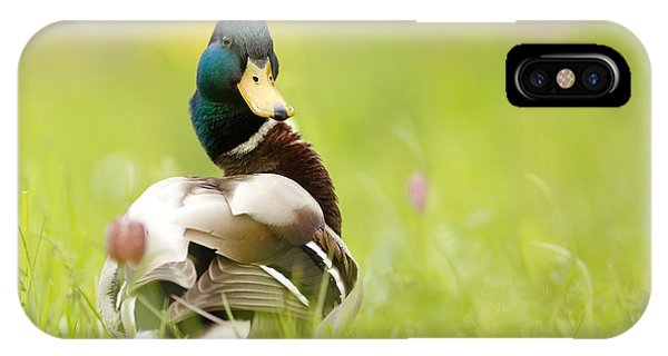 Mallard iPhone Case - I'm Too Sexy For This Site by Roeselien Raimond
