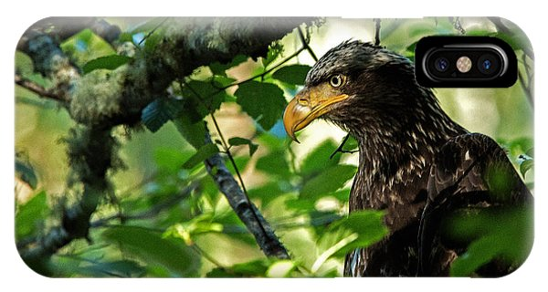 Juvenile Bald Eagle IPhone Case