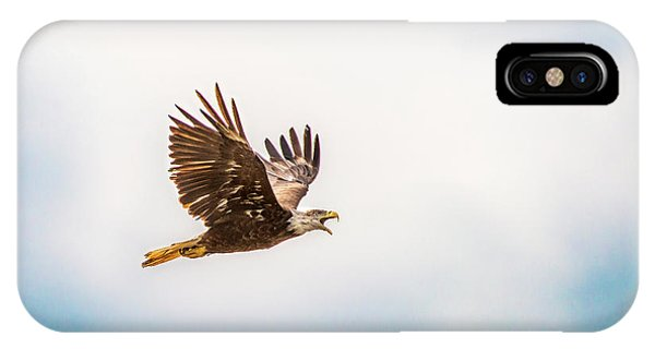 IPhone Case featuring the photograph Immature Bald Eagle by Onyonet  Photo Studios