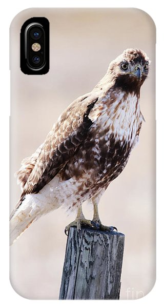Immature Red Tailed Hawk IPhone Case