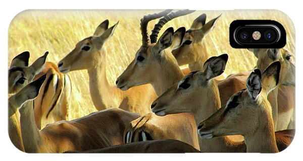 Impalas In The Plains IPhone Case