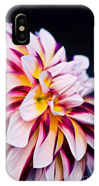 Impression D'un Dahlia IPhone Case