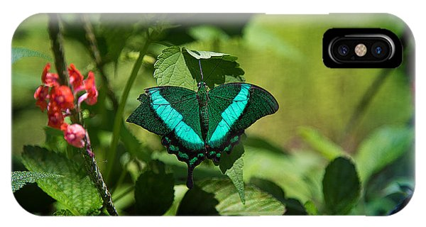 In A Butterfly World IPhone Case