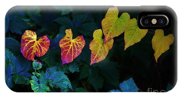 In Autumn's Light IPhone Case