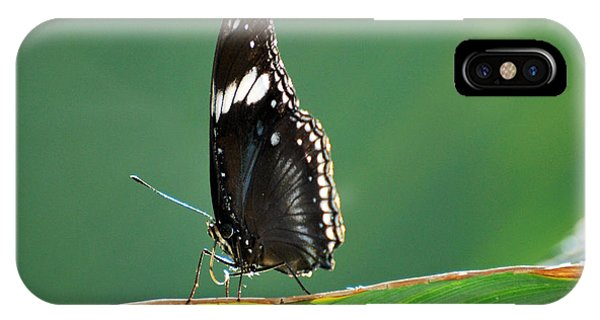 In The Limelight Phone Case by Teresa Blanton