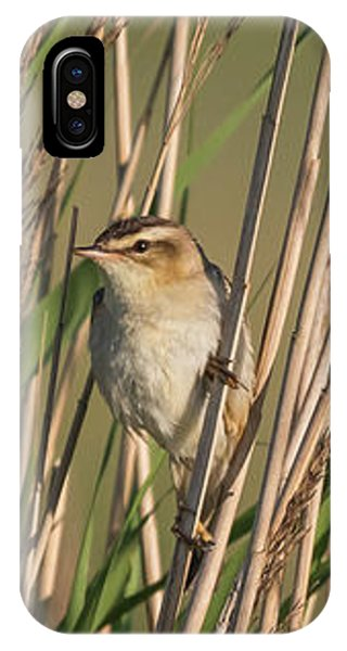 In The Reeds IPhone Case