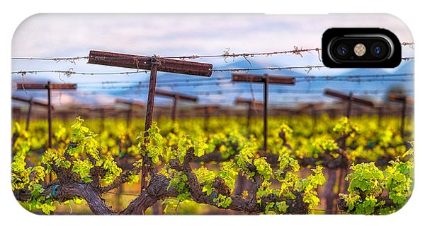 In The Vineyard IPhone Case