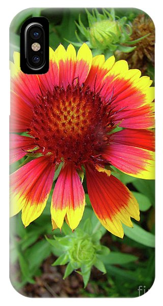Indian Blanket Flower IPhone Case