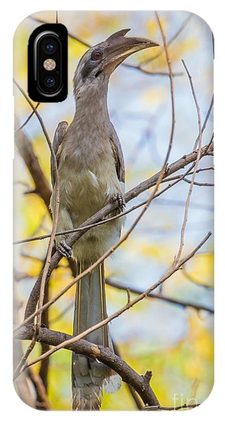 Indian Grey Hornbill IPhone Case