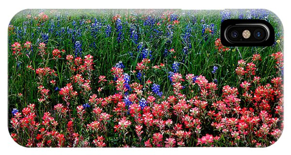 Indian Paintbrush #0486 IPhone Case