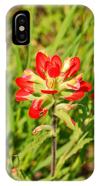 Indian Paintbrush Close Up IPhone Case