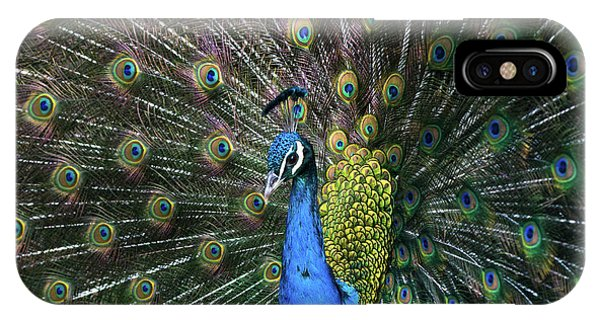 Indian Peacock With Tail Feathers Up IPhone Case