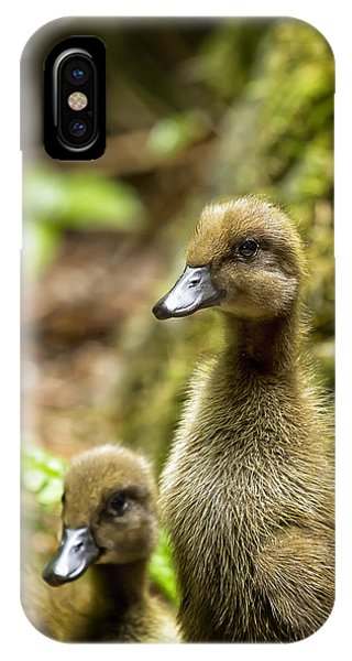 Indian Runner Ducklings No. 1 IPhone Case