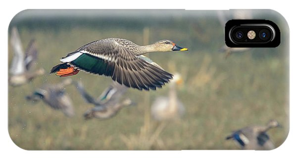 Indian Spot-billed Duck 01 IPhone Case