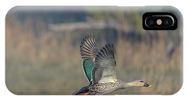 Indian Spot-billed Duck 03 IPhone Case