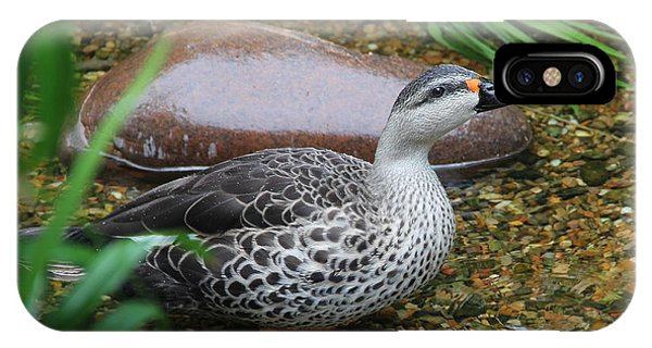 Indian Spot-billed Duck IPhone Case