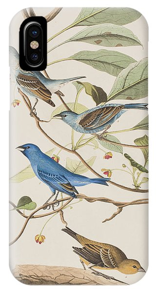 Audubon iPhone X Case - Indigo Bird by John James Audubon
