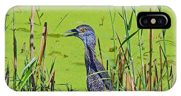 Inmature Black Crowned Heron. IPhone Case