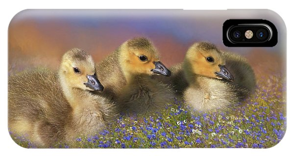 Goslings iPhone Case - Innocence by Donna Kennedy