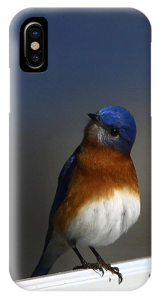 Inquisitive Bluebird IPhone Case