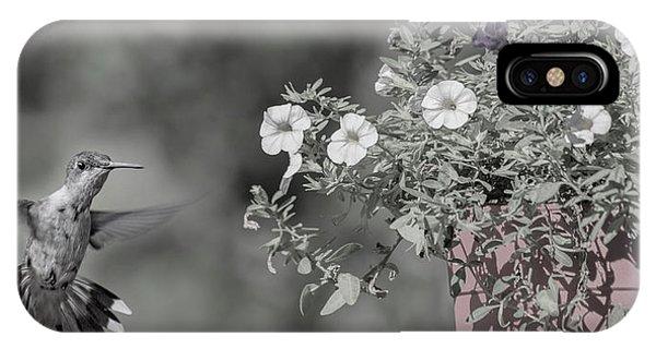 Beautiful Hummingbird iPhone Case - Inquisitive Hummingbird by Betsy Knapp