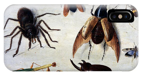 Insects, 1660 IPhone Case
