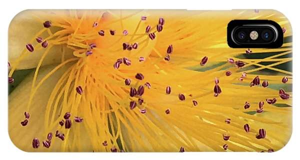 Inside A Flower - Favorite Of The Bees IPhone Case