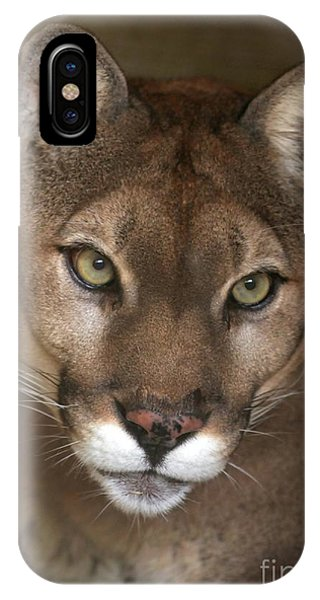 Intense Cougar IPhone Case