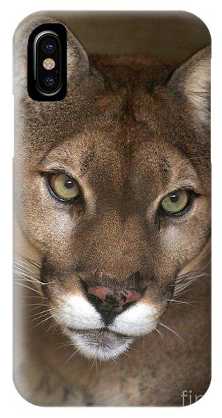 Intense Cougar IPhone Case