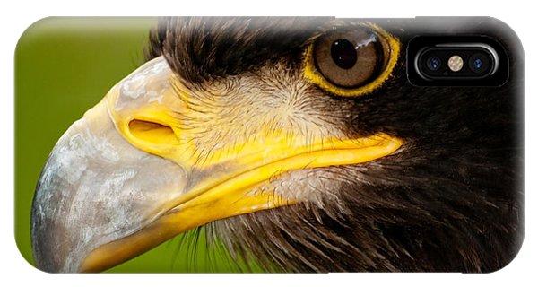 Intense Gaze Of A Golden Eagle IPhone Case