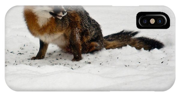 Crossville iPhone X Case - Intent Red Fox by Douglas Barnett