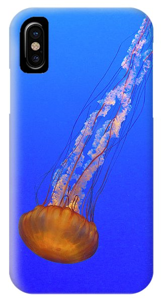 Monterey Bay Aquarium iPhone Case - Into The Blue by Brian Knott Photography