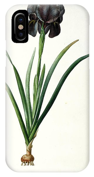Botanical iPhone Case - Iris Luxiana by Pierre Joseph  Redoute