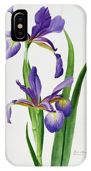 Botanical iPhone Case - Iris Monspur by Anonymous